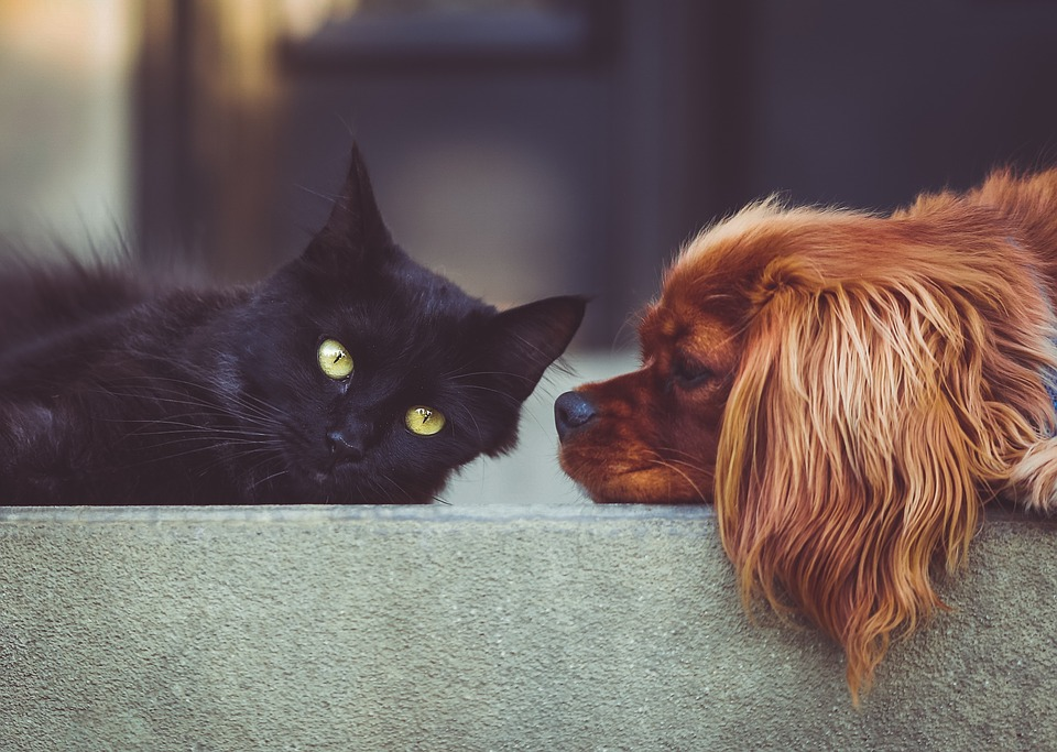 Protecting Those Who Can't Protect Themselves, Part III: Hurricane Safety for Pets